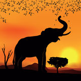 African landscape with elephant and tree. African landscape sunset with elephant and tree Royalty Free Stock Image