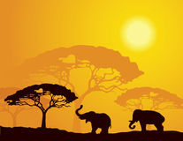 African landscape with elephants. Silhouettes under a hot sun Stock Photos