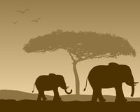 African Landscape & Elephants. African landscape scene with elephants. Eps file available Royalty Free Stock Photos