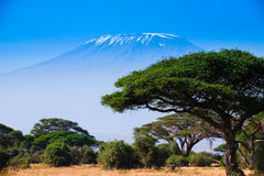 African landscape with elephants and  Kilimanjaro Mountain Royalty Free Stock Images