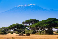 African landscape with elephants and  Kilimanjaro Mountain Stock Photos