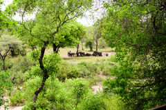 African landscape with elephants Stock Photography