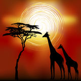 African landscape with giraffes. African landscape flora and fauna in sunset time with giraffes. Vector Stock Photography