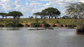 African landscape with hippo's Stock Photography