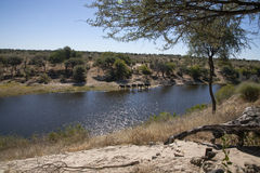 African Landscape in Kalahari, Botswana. Looking across a wide river from one riverbank to the other side, the Kalahari, dotted with trees, stretches out during Royalty Free Stock Photography