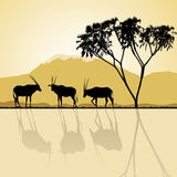 African landscape. Kenya. African landscape flora and fauna in sunset time with antelopes. Vector Royalty Free Stock Image