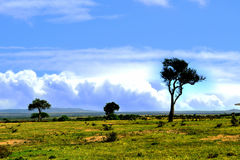 African landscape Royalty Free Stock Images