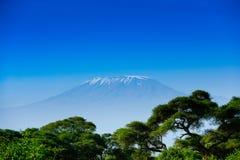African landscape with Kilimanjaro Mountain stock image