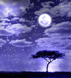 African landscape in moonlight vector illustration