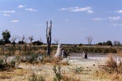 African landscape Stock Image