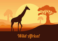 African landscape in orange tones. Giraffe on the background of the sun. Vector illustration in flat style. African landscape in orange tones. Giraffe on the Royalty Free Stock Photo