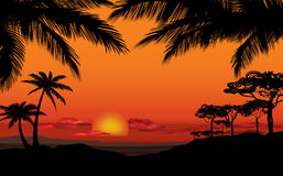 African landscape with palm silhouette. Savanna sunset backgroun Stock Photos