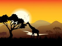 African Landscape Poster. With acacia tree giraffe and sunset on background vector illustration Stock Photo