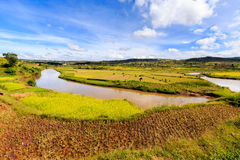 African landscape with river running through rice fields Stock Photo