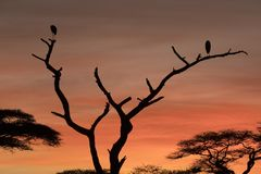 African landscape while in safari. Typical African landscape while in safari Stock Image