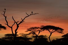 African landscape while in safari. Typical African landscape while in safari Stock Photo