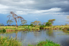 African landscape, Serengeti, Tanzania Royalty Free Stock Photography