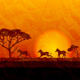 African landscape, silhouettes of zebras on sunset background. African landscape, silhouettes of zebras running on sunset background Stock Photos