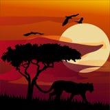 African landscape with tiger. Vector. Illustration.desert wildlife Stock Photos