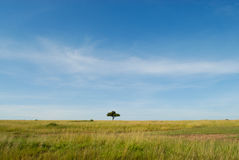 African landscape with tree, Masai Mara, Kenya Stock Image
