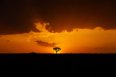 African Landscape. With a tree after sunset Stock Photo
