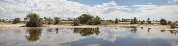 African landscape with trees reflected in water Stock Photography