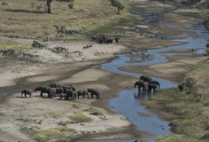 African landscape view with elephants and zebra Stock Images