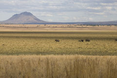 African landscape with volcano and elephants Royalty Free Stock Photography