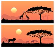 African landscape with wild animals. Wild animals in the backdrop of the African sunset Stock Photo