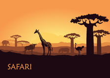 African landscape with wild animals. Wild animals in the backdrop of the African sunset Royalty Free Stock Photos