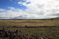 African Landscape With Migrating Wildebeest Stock Image