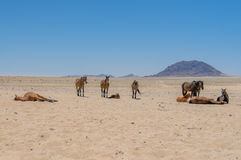 African landscapes - Namib desert Namibia Royalty Free Stock Photos