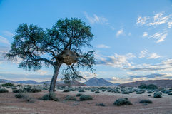 African landscapes - Namib desert Namibia Stock Photos