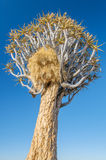 African landscapes - Quiver Tree Forest  Namibia Stock Photos