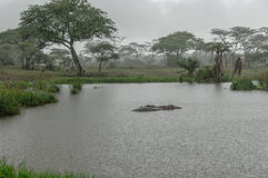 African landscapes - Rain at Serengeti National Park Tanzania Stock Photos