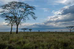 African landscapes - Serengeti National Park Tanzania Stock Photo