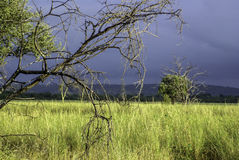 African landscapes Stock Image