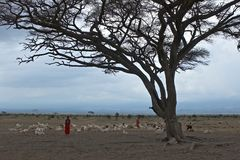 African lanscape with masai. Stock Photos