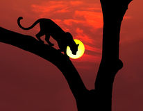 African leopard silhouette. African leopard in tree silhouette with round yellow setting sun and red sky Stock Image