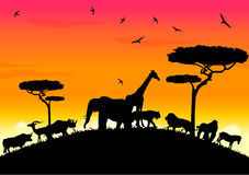 african life with sunset Stock Photos