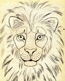 african lion 向量例证