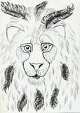 african lion 皇族释放例证