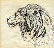 african lion Απεικόνιση αποθεμάτων