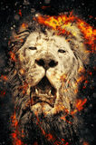 African lion. Angry African lion, fire illustration Royalty Free Stock Image