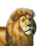 African lion. Closeup of an African lion, isolated on white background. Digital illustration for art, flyers, albums, art, print, web vector illustration