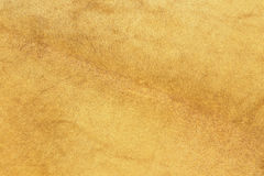 African lion fur. Texture of real pelt stock images