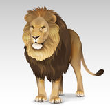 African lion 2. Illustration of color African lion Royalty Free Stock Photography