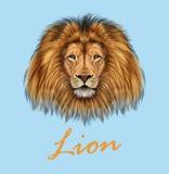 African Lion Portrait Stock Photos