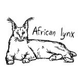 African lynx - vector illustration sketch hand drawn with black Royalty Free Stock Image