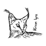 African lynx - vector illustration sketch hand drawn with black Royalty Free Stock Images